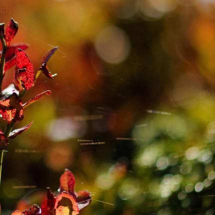 Im Herbst explodiert die Heide zu einem Farbenmeer.