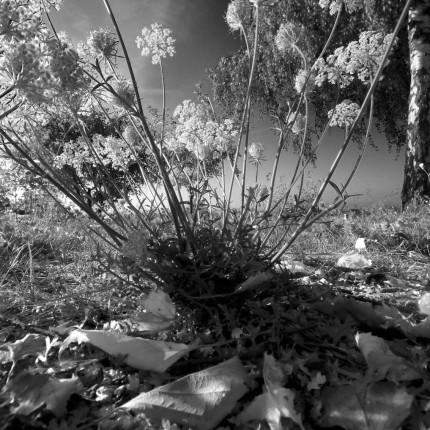 Weitwinklige Pflanzenaufnahmen ziehen den Mikrokosmos in die Weite.