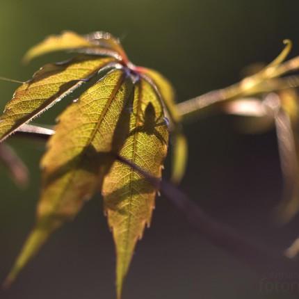 Spinne lauert auf einem Blatt.
