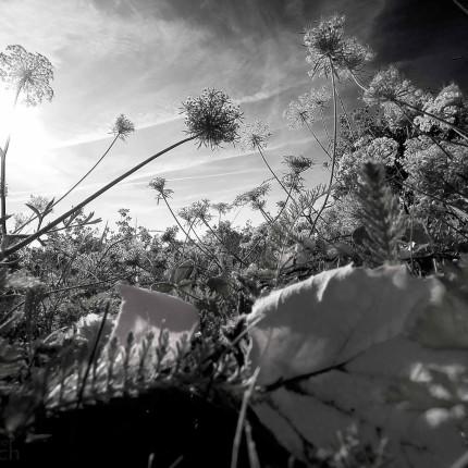 Pflanzennahaufnahme mit Extremweitwinkel-Objektiv
