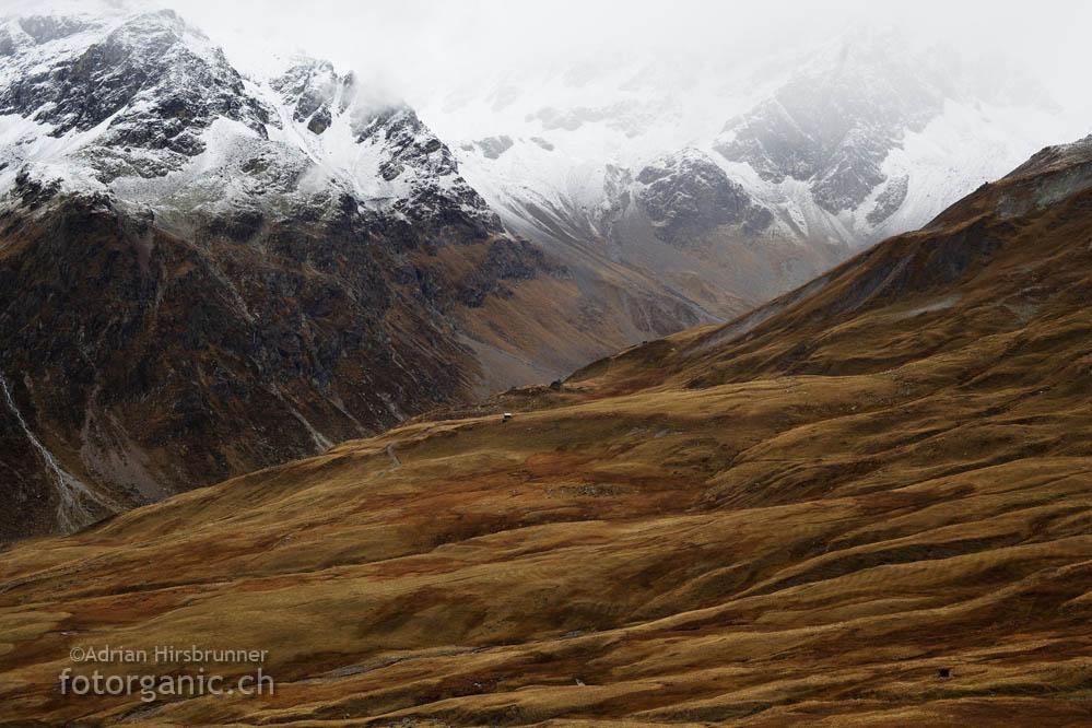 Auf dem Weg zum Lej Blau. Kupferfarbenes Gras und der erste Schnee.