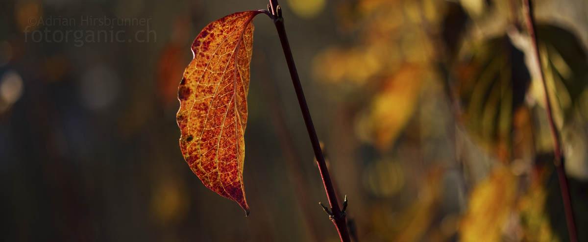 Herbstbild mit dem Makro-Planar T* 50mm f2. Harmonisches Bokeh