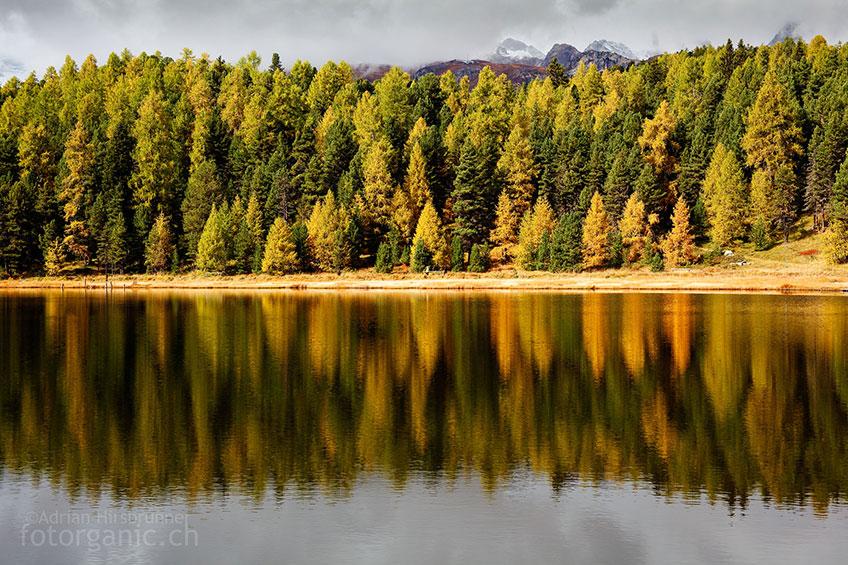 Der Lärchen-Arvenwald am Stazersee ist im Herbst eine Augenweide.