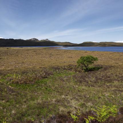 Schottland ist allgemein nicht besonders reich an Bäumen. Hier ein Einzelstück in einem der zahlreichen Hochmoore.