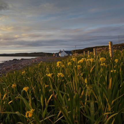 Letzte Sonnenstrahlen auf Schwertlilien, Schottland