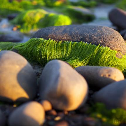 Die behaarten Steine von Gairloch.