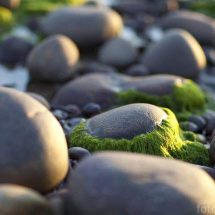 """Die """"behaarten"""" Steine vom Strand von Gairloch."""