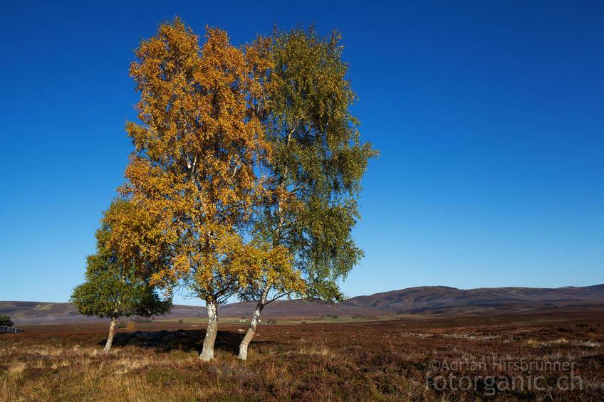 Ein Herbstbild aus den östlichen Highlands
