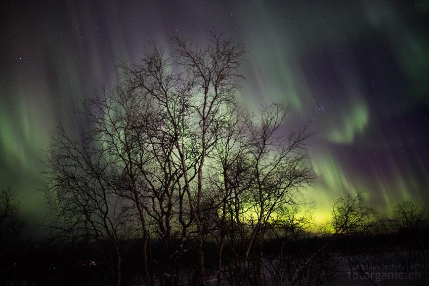 Mittendrin! Wo wir auch hinschauen: Der ganze Himmel ist voller Polarlichter!