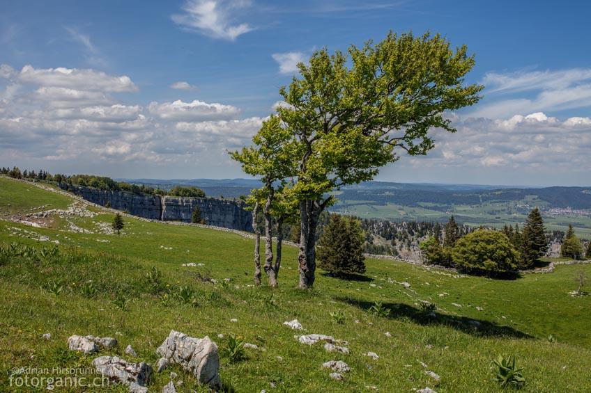 Auf dem Plateau oberhalb des Creux du Van lässt's sich bequem spazieren.