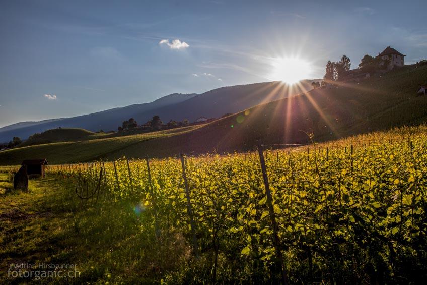 Attraktive Landschaften am Neuenburgersee: Die sanften Weinhügel bei Bevaix NE sind nicht nur für den Weingeniesser interessant.