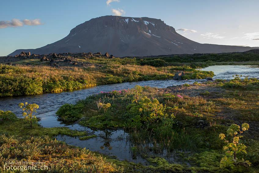 Der Tafelvulkan Herðubreið von der Oase Herðubreiðarlindir aus betrachtet.