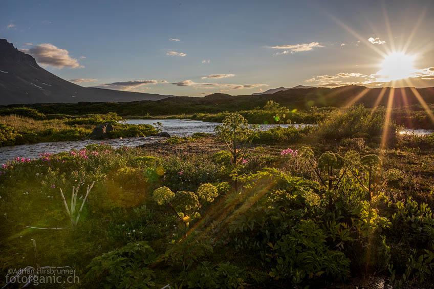 Die Oase Herðubreiðarlindir ist eine wohltuende Abwechslung in der grauen Wüste.