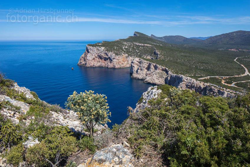 Die Karstklippe nahe der Grotta di Nettuno bietet Tiefblick ins azurblaue Meer.
