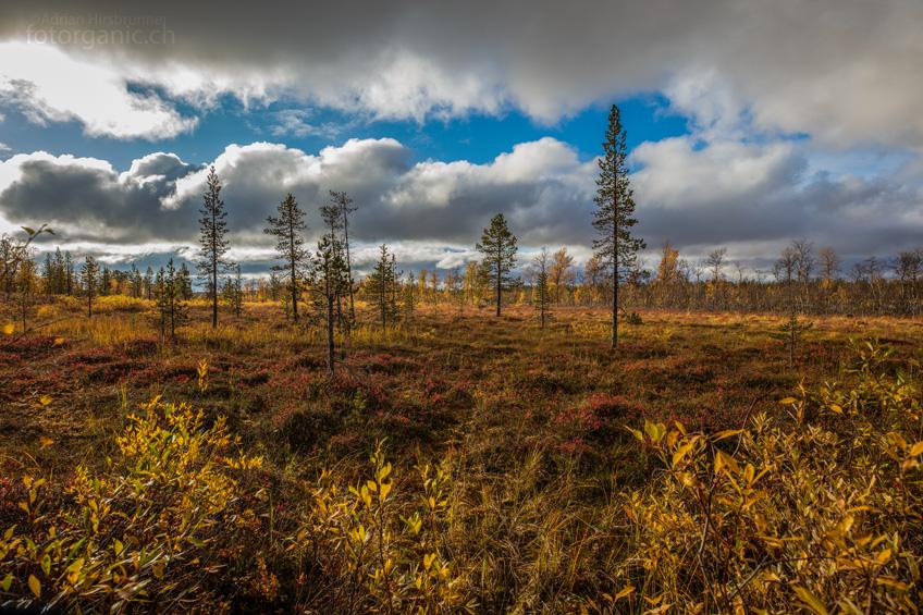 Die Finnische Tundra entfacht im Herbst ihr Feuer.