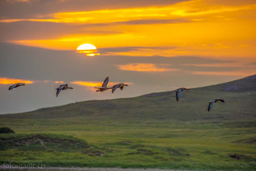 Wie viele andere Orte in Schottland, ist auch die Coigach-Halbinsel ein Vogelparadies.