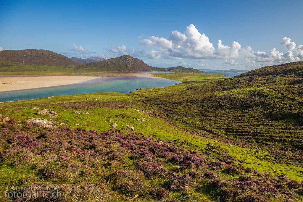 Wenn die Heide in voller Blüte steht, verwandelt sich die Landschaft rund um den Chaipaval in ein Farbenmeer. Die Kombination mit dem grünen Wasser des Sgarasta Mhòr Beach Deltas ist unvergleichlich.