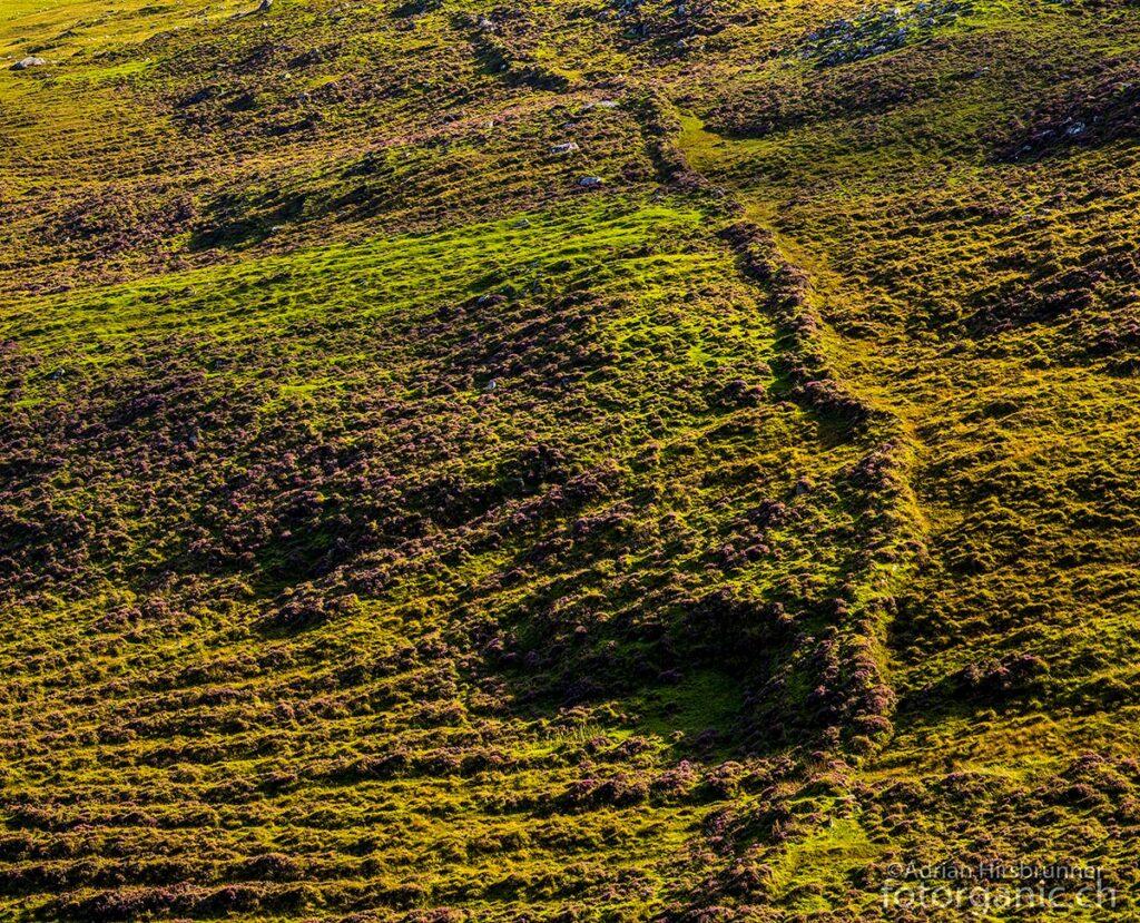 Die Spuren jahrhundertelanger Beweidung haben dem Gelände eine einmalige Textur eingeprägt.